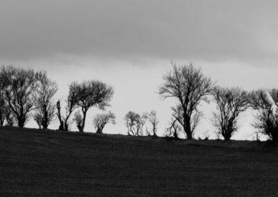 Træer på Mols