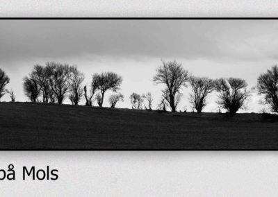 y2018 03 26_Træer på Mols_2039 med ramme