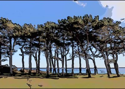 Fyrretræer Sletterhage