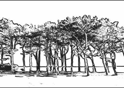 Fyrretræer Sletterhage SH