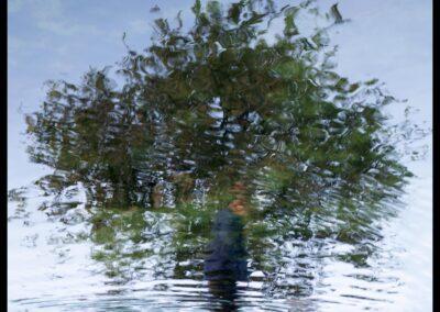 Spejling Træ